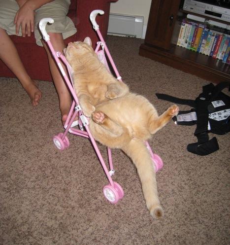 stroller 1
