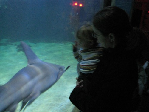 Watching sharks with Mommy
