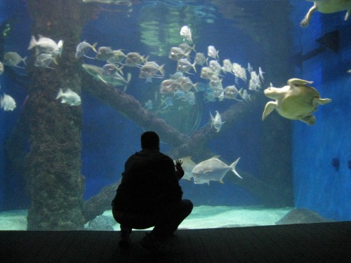 Watching Turtles and Fish