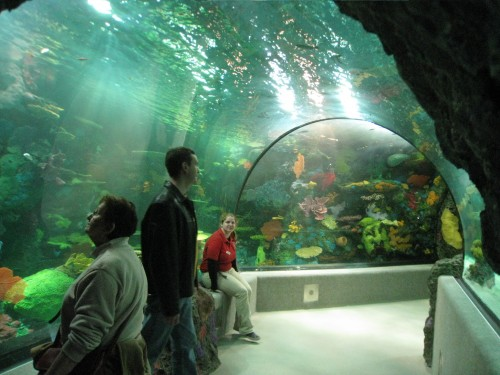 Walk-through Tropical Aquarium