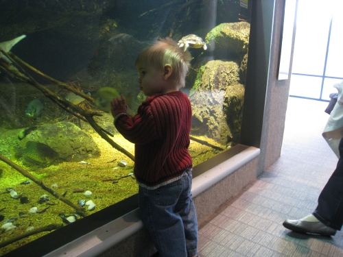 Linus gazes at fish
