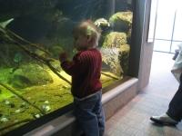 Linus gazes at fish